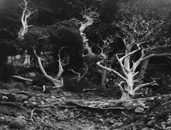 Edward Weston, Cypress Root, Point Lobos, 1929   Seagrave